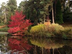 Bedgebury National Pinetum at Bedgebury, Kent