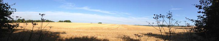 The golden fields ofharvest