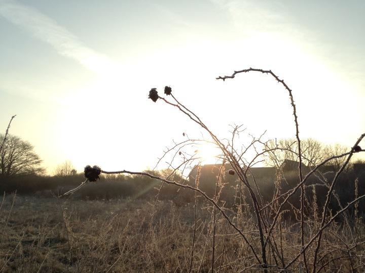 Rising sun on thehorizon