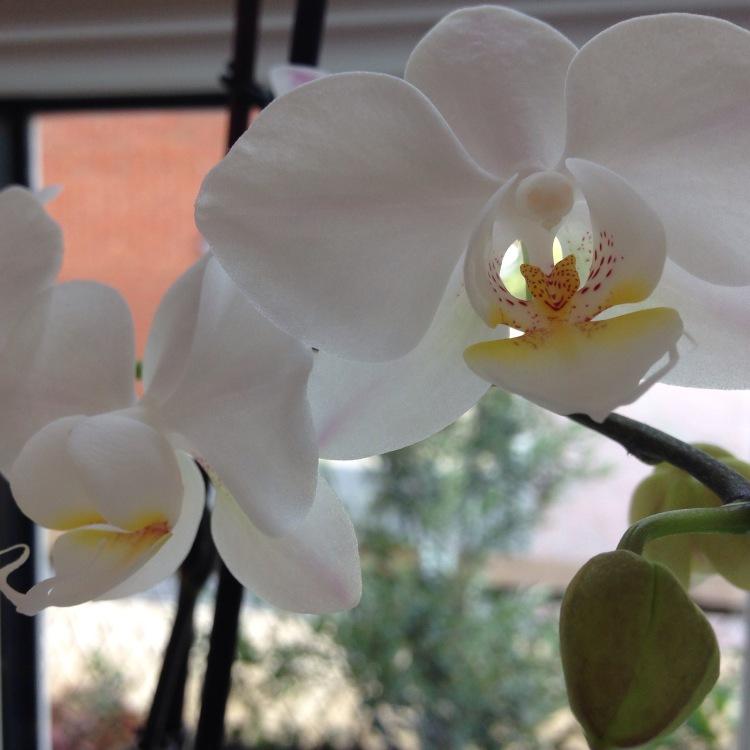 Orchids 11.jpg